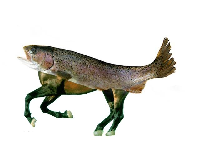 TUTO – Comment créer un cheval saumon sur Photoshop